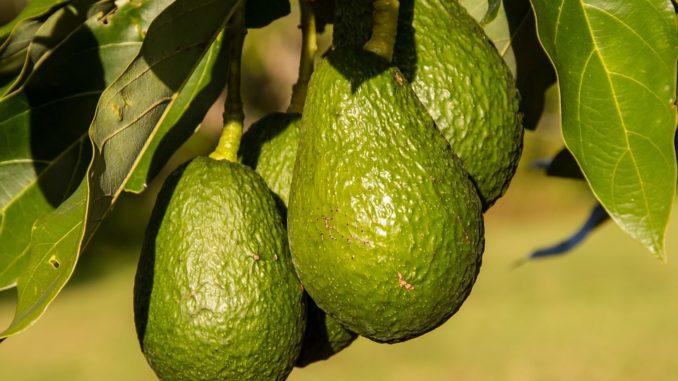 Avocado-richtig-schneiden