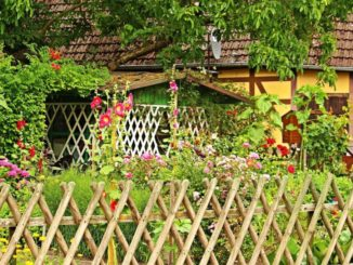 Bauerngarten anlegen – Ideen und Tipps