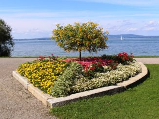 Beeteinfassung-fuer-den-Garten