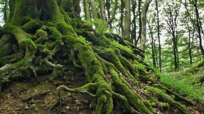 Dieser Baum kann mit Entmooser entmoost werden