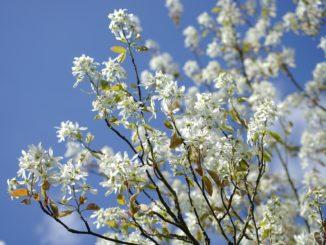 Pralinenbaum