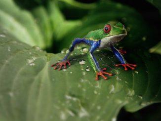 Frosch frei und in keiner Froschfalle
