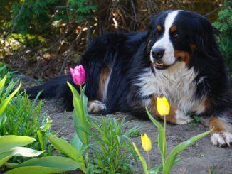 Hund im Schatten im Garten