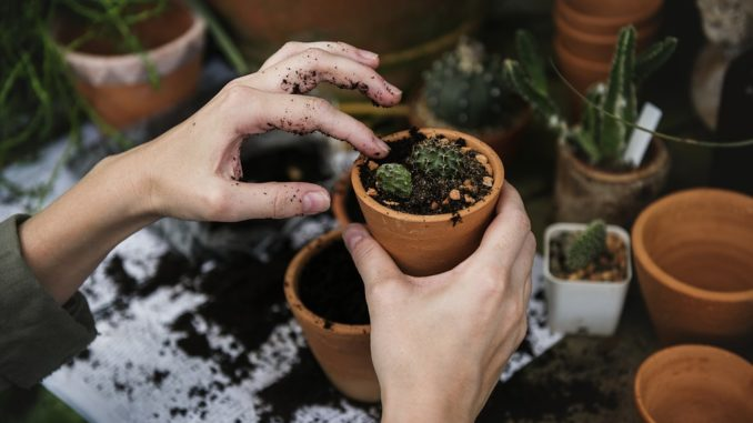 kleine pflanzen mit dünger