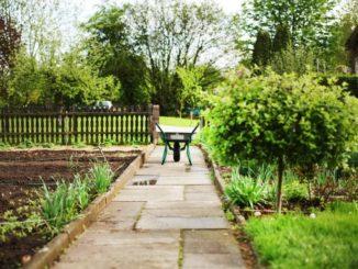 Kleingartengesetz – Was beinhaltet es?