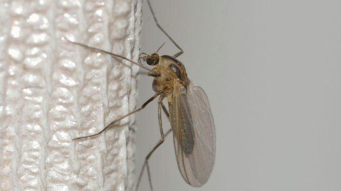 Mueckennetze