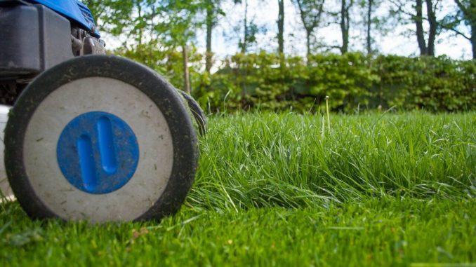 Die besten Minirasenmaeher kann man gut im Garten verwenden