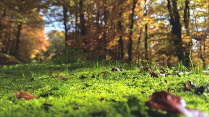Pflanzen im Wald bestimmen