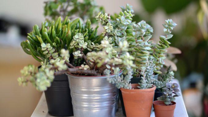 Pflanzenbestimmungsbuch-für-den-haushalt