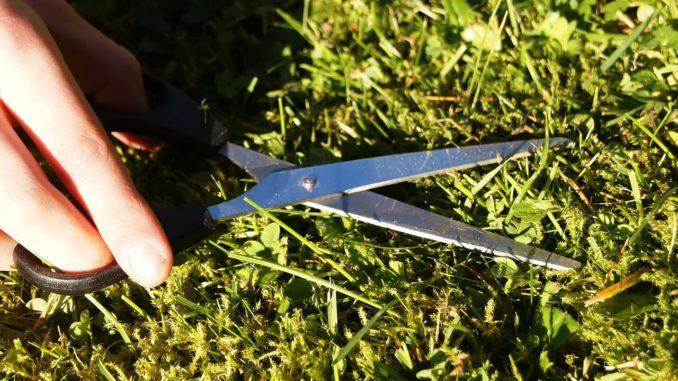 Mit einer Schere wird der Rasen geschnitten, man koennte aber auch einen Entmooser verwenden