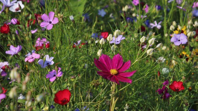 Wiesenpflanzen bestimmen
