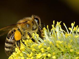 Wildbienen-vertreiben
