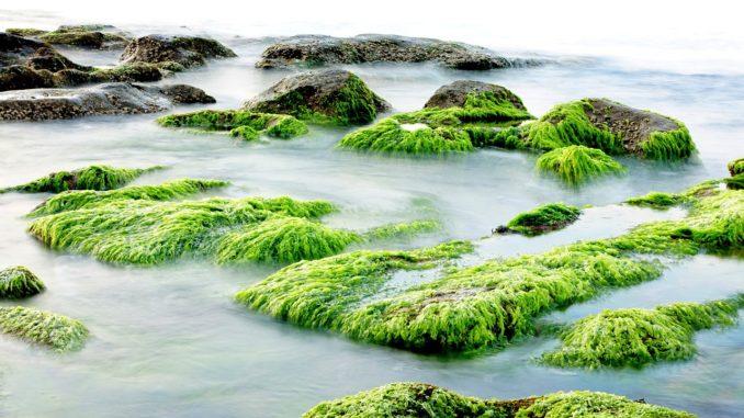 algenbefall-aquarium-und-teich