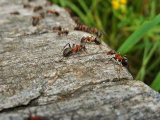 Ameisen_bekämpfen-ameisenspray