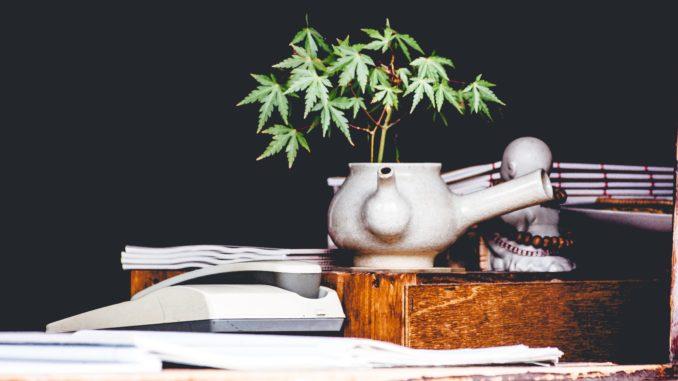 autoflowering-indoor-grow-gras