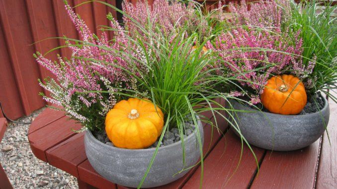Pflanzenschale Herbst Kürbis