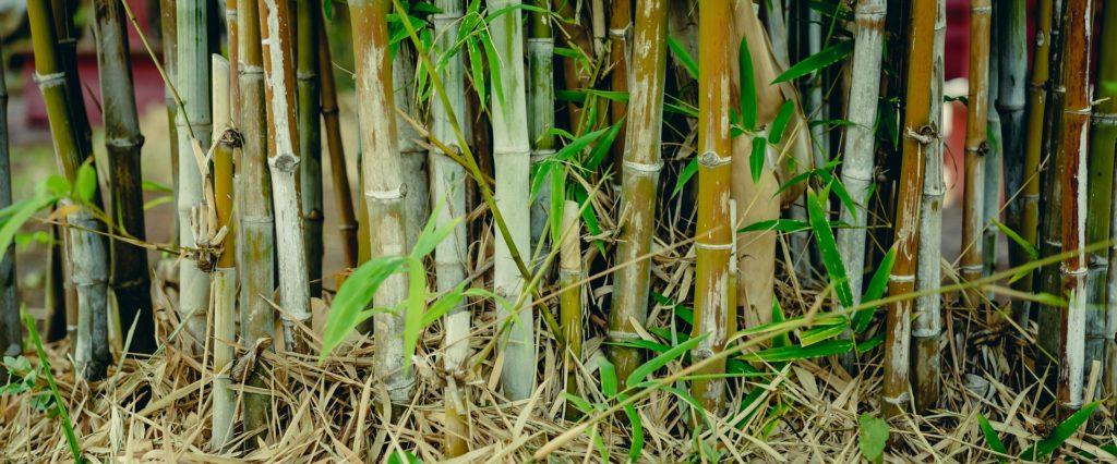 Wurzelsperre Fur Bambus Und Himbeeren Gartenrevue De