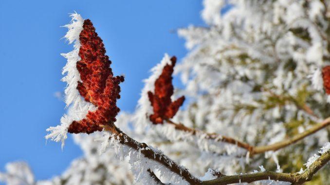 baum-schneiden-frost