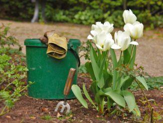 Ökologischer Gartenbau und Gartenbewirtschaftung