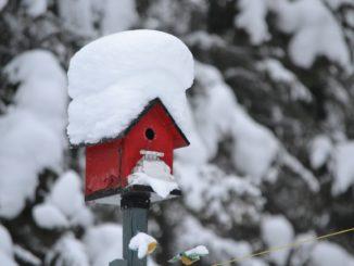 Winter Garten Vogelhaus