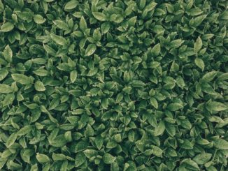blaetter-bestimmen-pflanzenbestimmungs-ebook