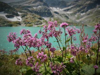 blumen-austria-bestimmung