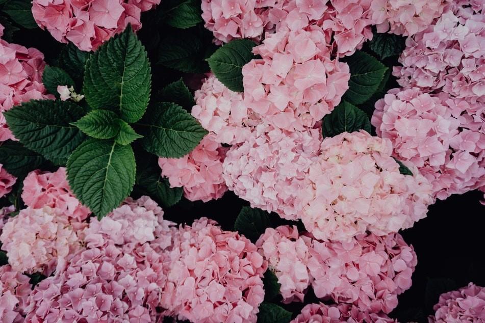 Wildpflanzen Bestimmen Nach Blütenfarbe : blumenbestimmung blumen finden tipps vorgehensweise ~ Watch28wear.com Haus und Dekorationen
