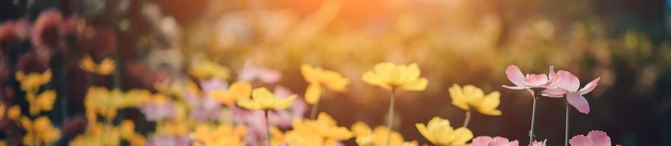 blumen-pflanzenbestimmungsbuch