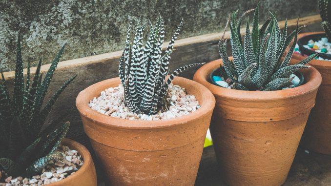 blumenbaenke-und-pflanzentreppe