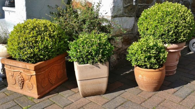 Pflanzkübel für außen » Gartenrevue.de