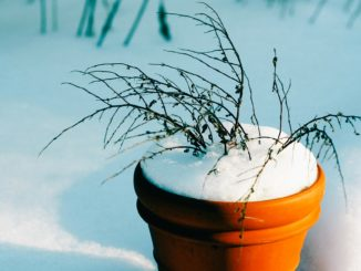 Pflanzkübel winterfest