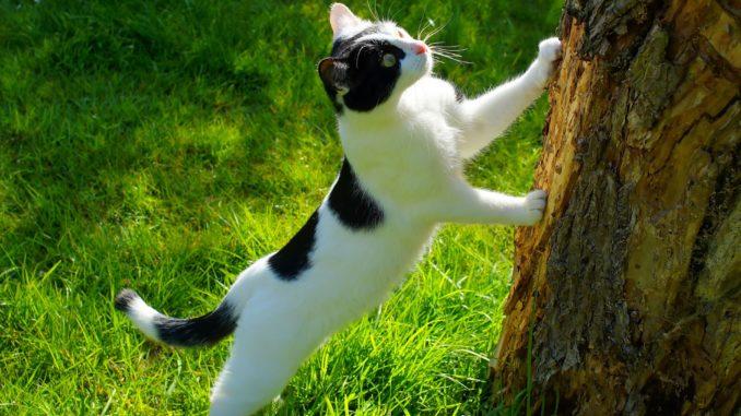 Katze Baum