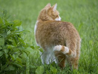 Katzen vertreiben