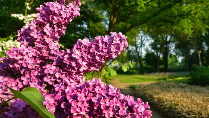 eigentumsgarten