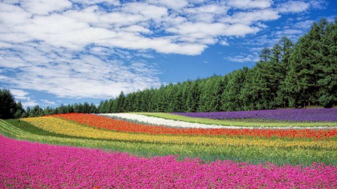 flora toskana