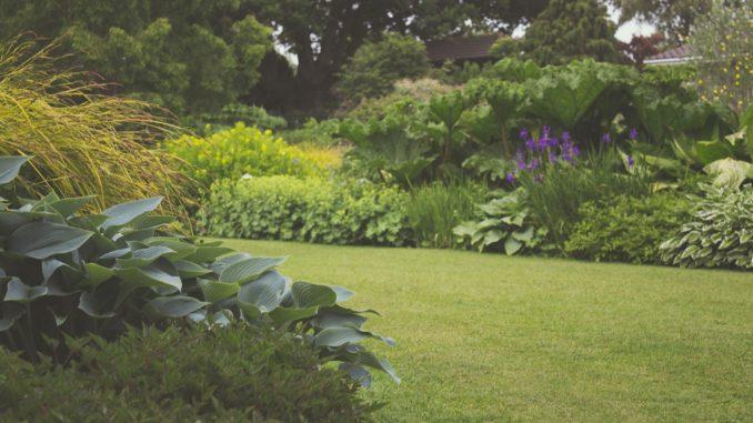 Gartenrasen