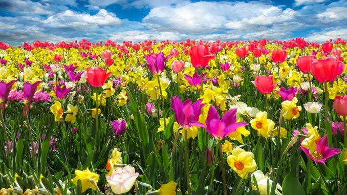 grundkurs-zur-pflanzenbestimmung
