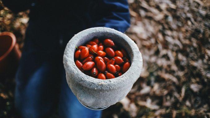 juckpulverpflanze-hagebutte-giftig