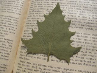 Herbarium selbst anlegen