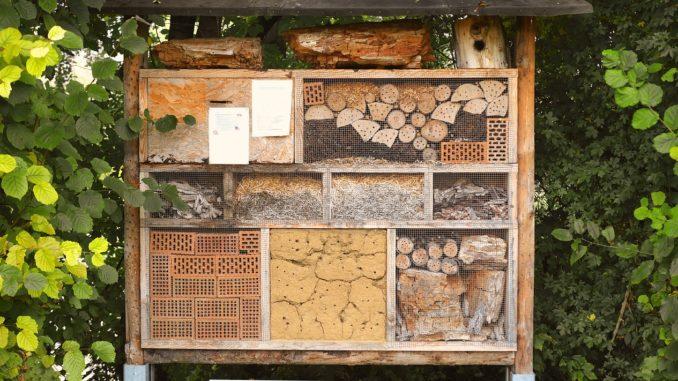insektkasten-hotel