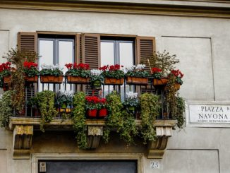 italienische-pflanzen-bestimmen