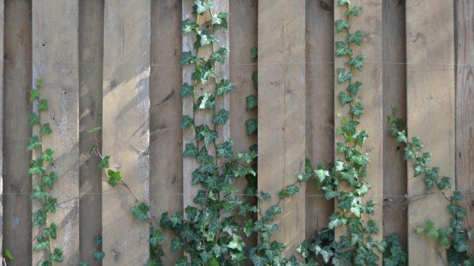 Larmschutzwand Selber Bauen Anleitung Gartenrevue De