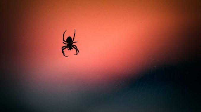 Spinne hängt an einem Faden mit rotem Hintergrund