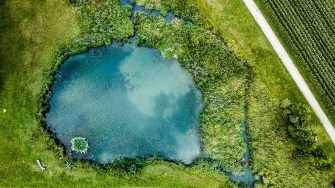 Pool in Teich umwandeln im Garten