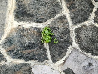 Lavasteine für den Garten