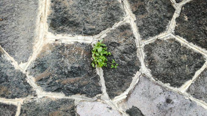 Ganz und zu Extrem Lavasteine für den Garten » Gartenrevue.de #ZQ_78