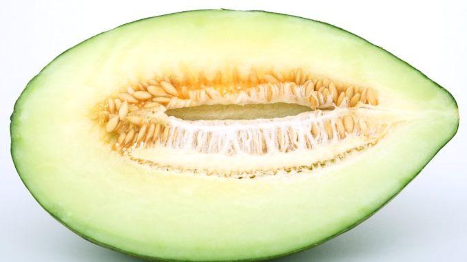 melonenkerne-einpflanzen-anleitung