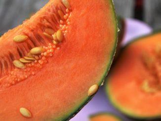 melonenkerne_einpflanzen