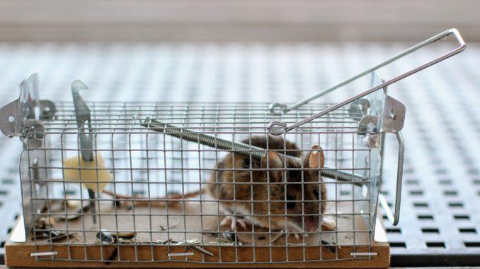 Mäusefalle