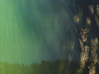 neongruene-algen